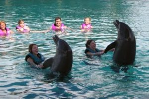swimming with dolphins at marine park