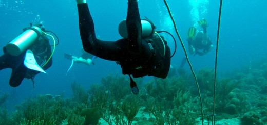 sea bed of sosua beach cleaned by divers