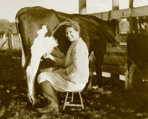 Woman milking a cow in Sosua