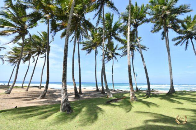 Palms in the beach